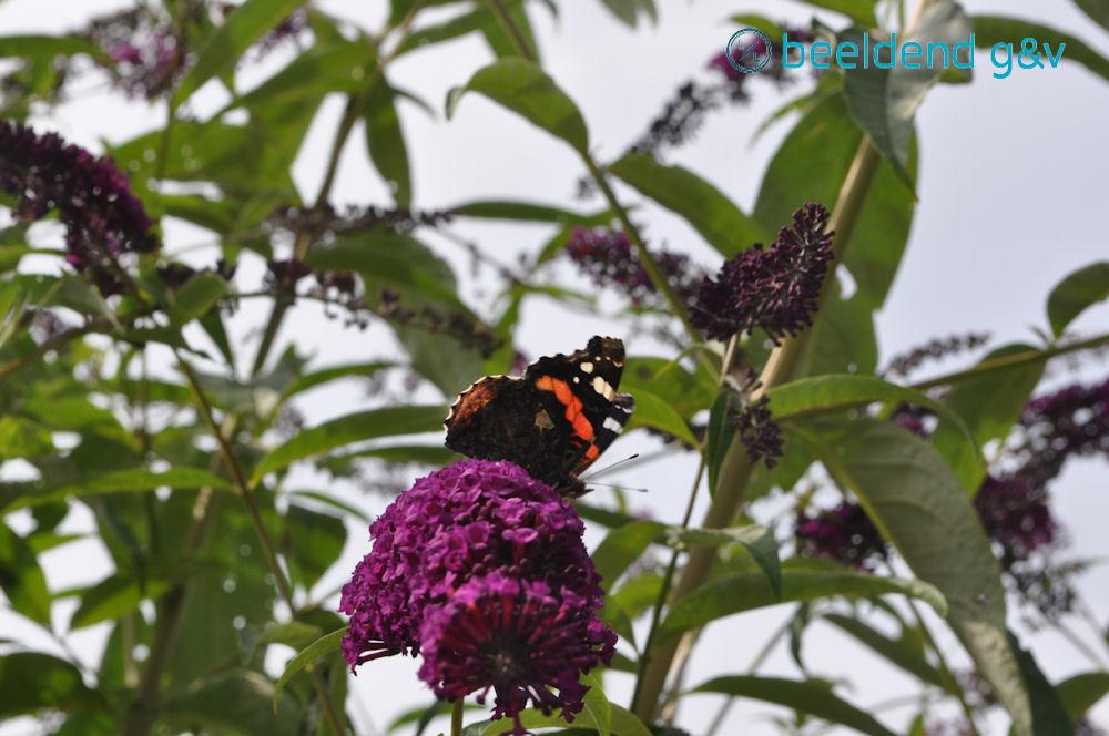 20150801 Vlindertelling 1