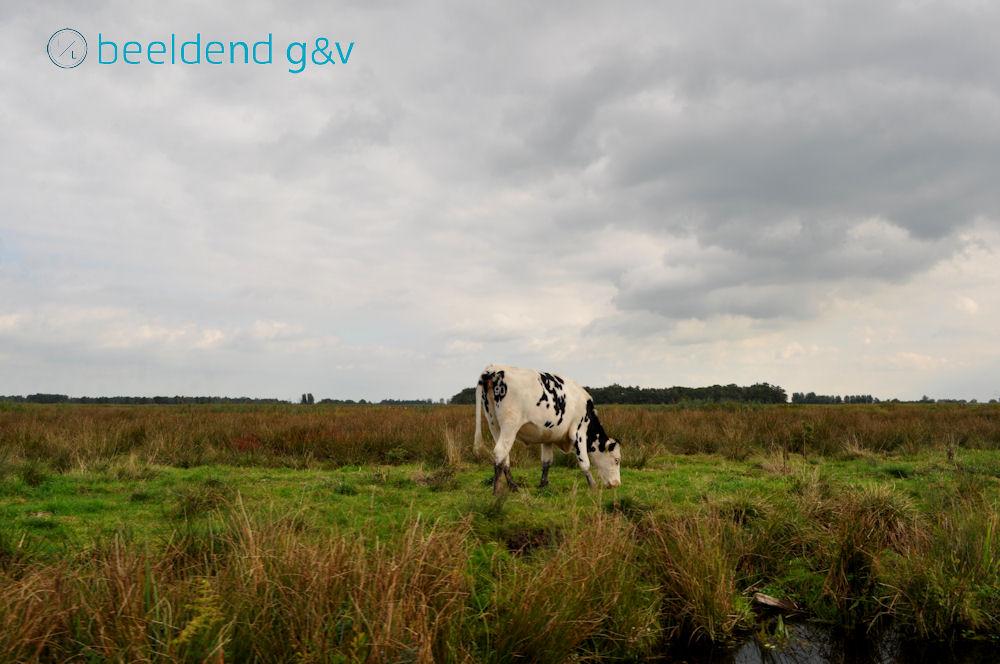 20131006 Nieuwkoopse Plassen 4