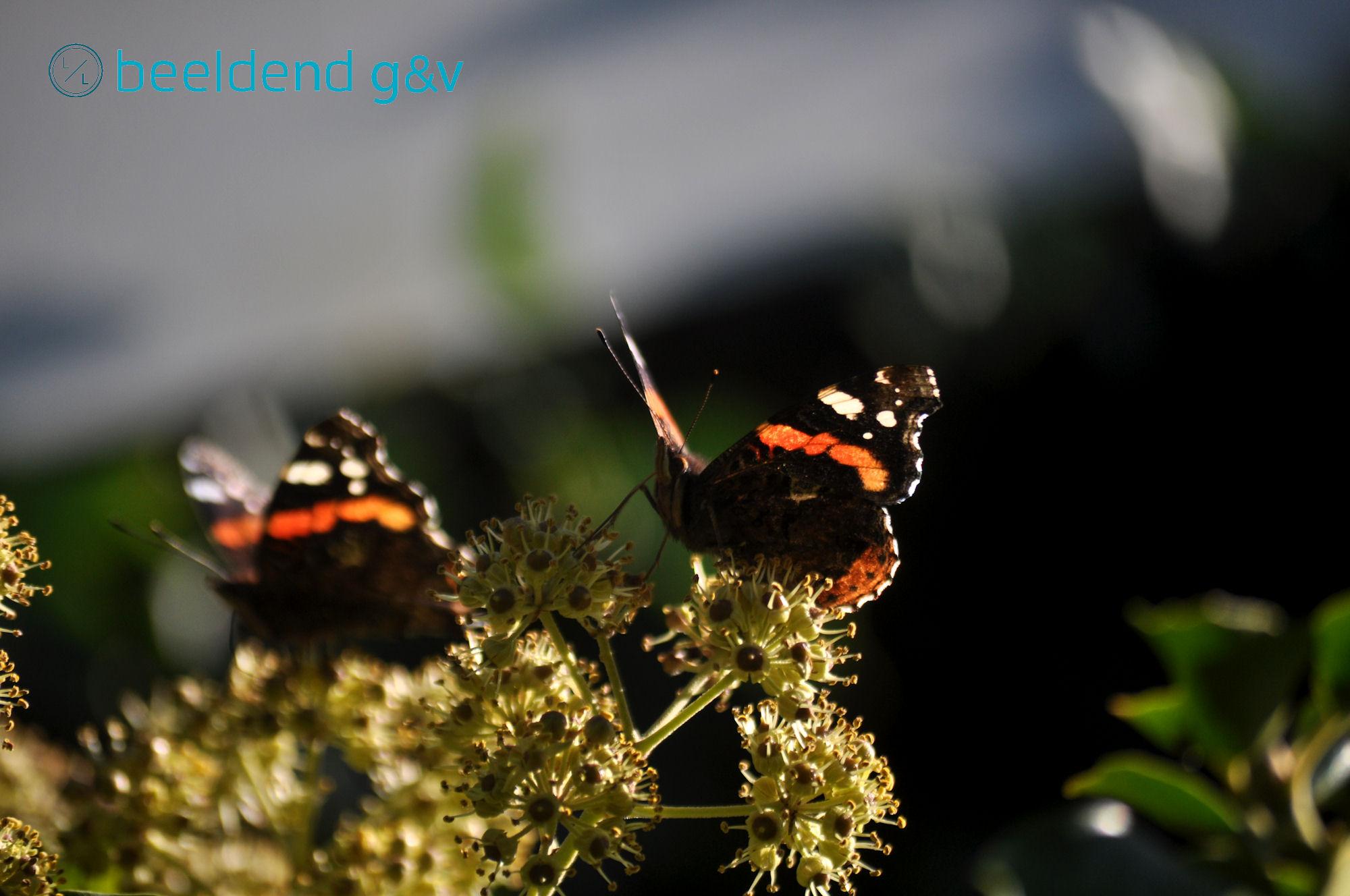 20151002 Vlinderfeest 1