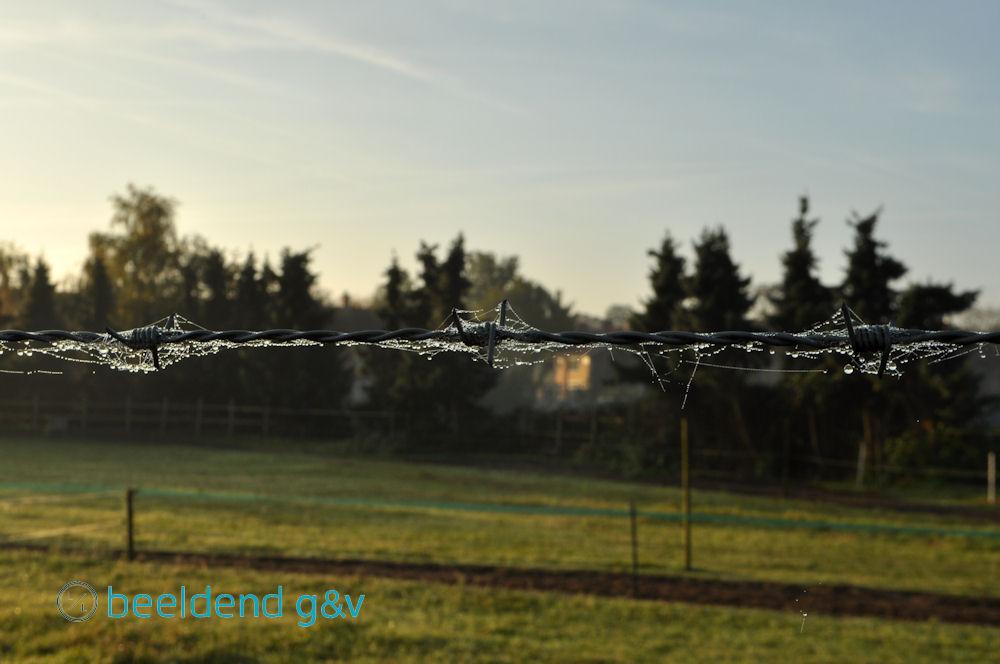 20151102 Dauwtrappen 7