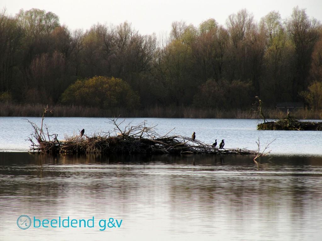 20131202 Almeerse natuur 8