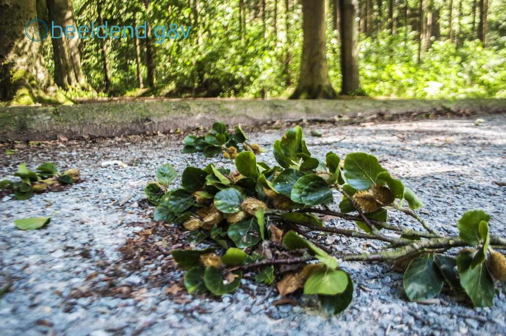 In het bos vallen de takken bij bosjes