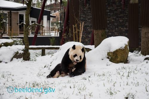 Xing Ya in de sneeuw